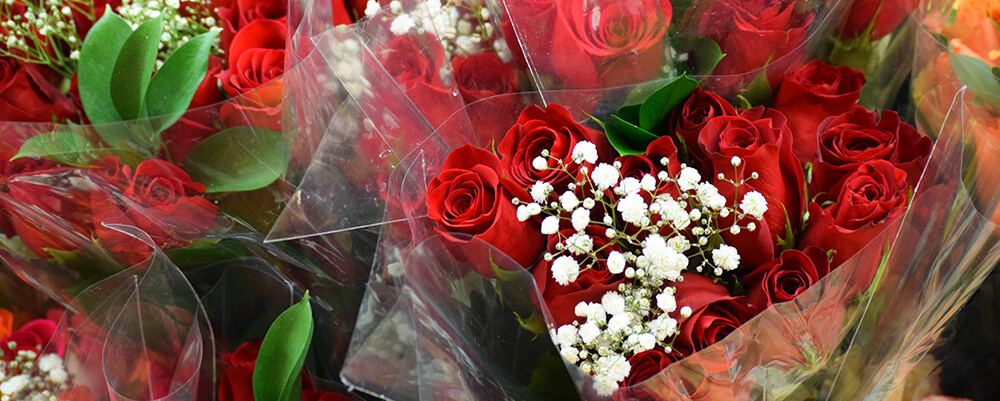 Red roses with baby's breathe in plastic wrapping